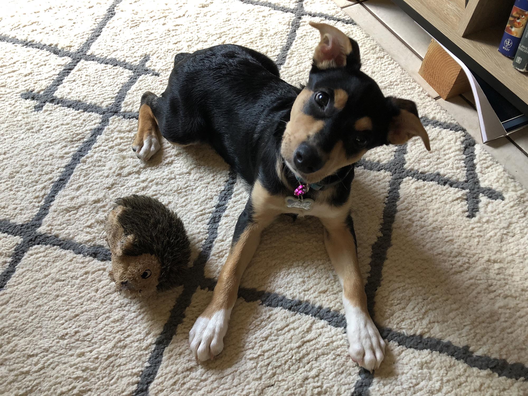 Common Canine Parasites
