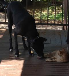 Caravaggio loves cats