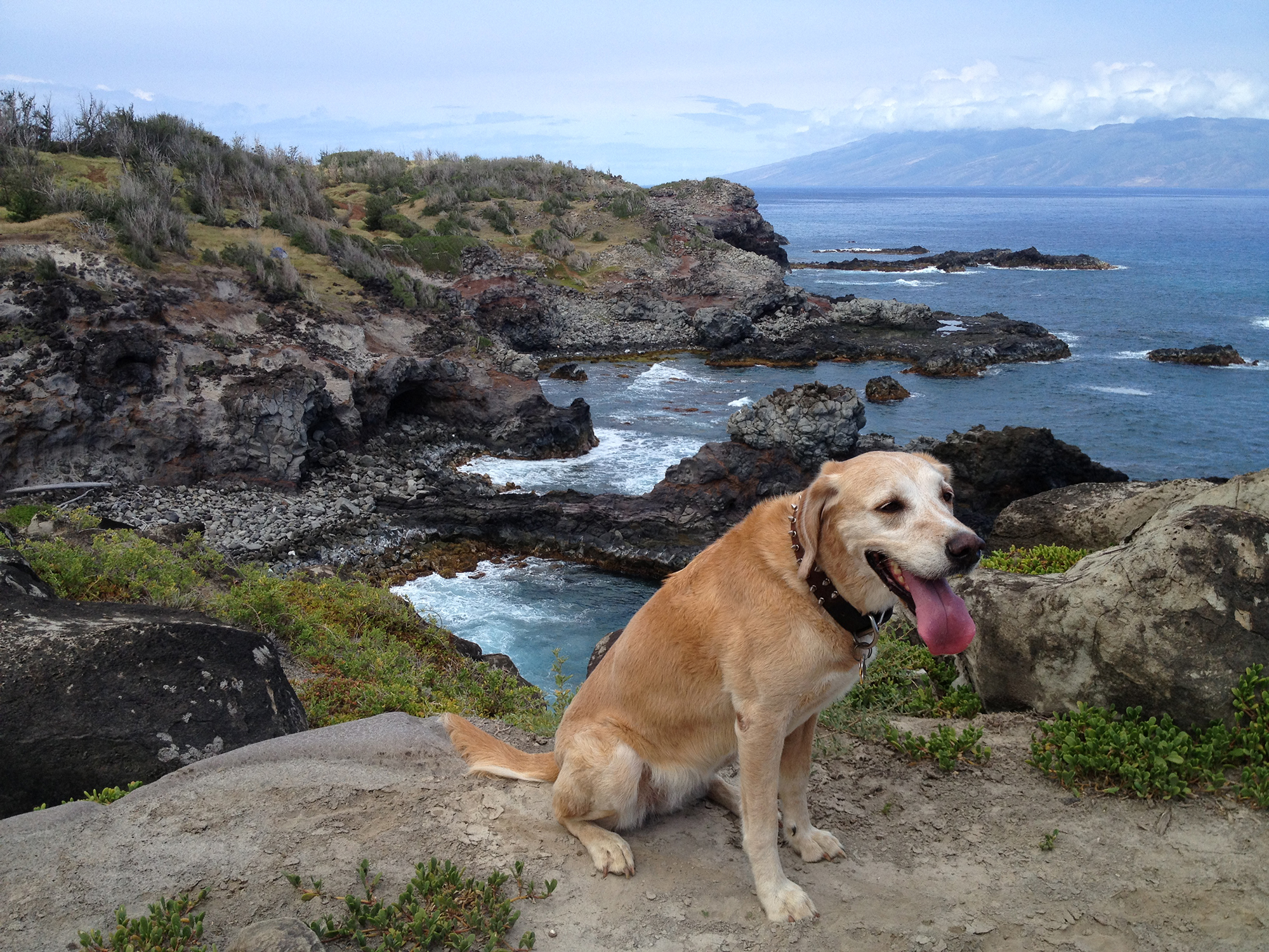 Trainer Tips–What do your dogs really want to do?