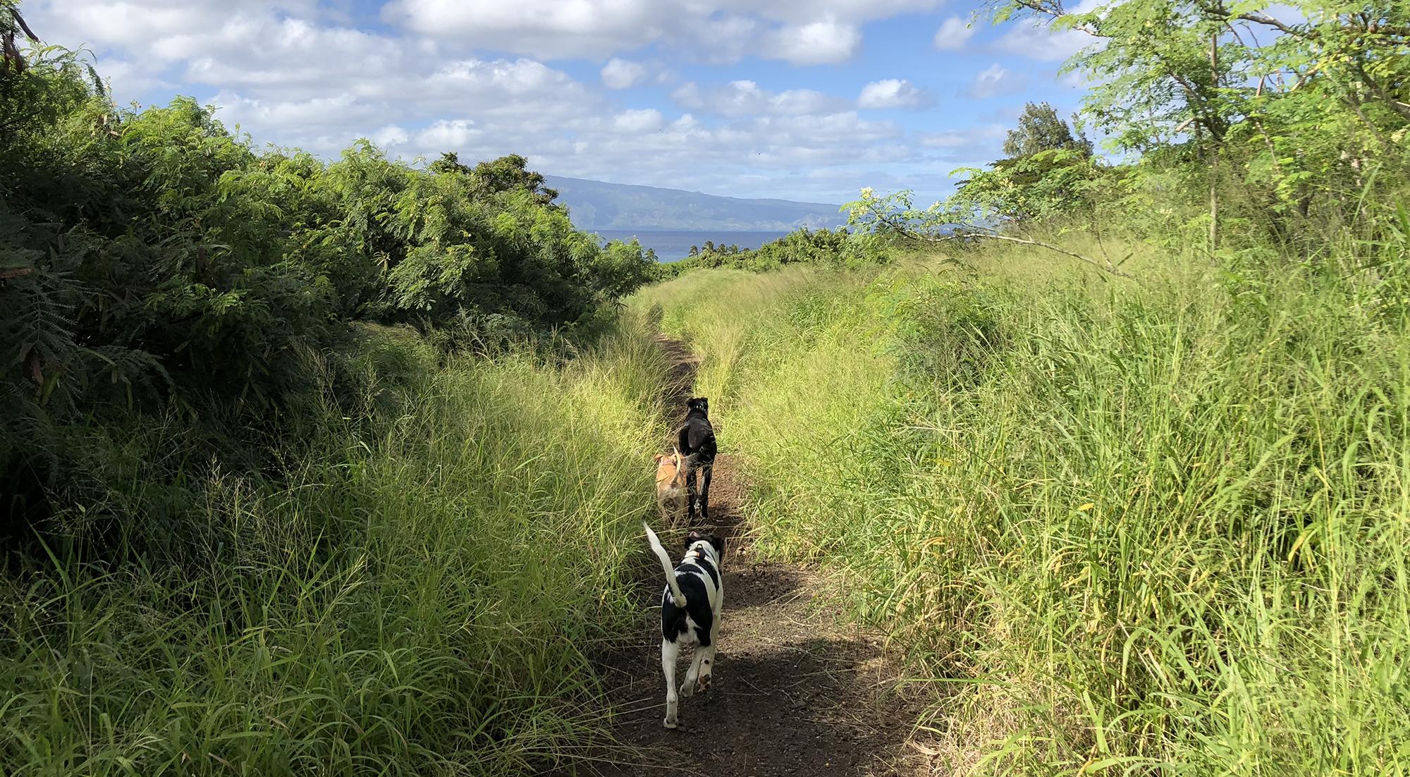 Launiupoko Trail Hike