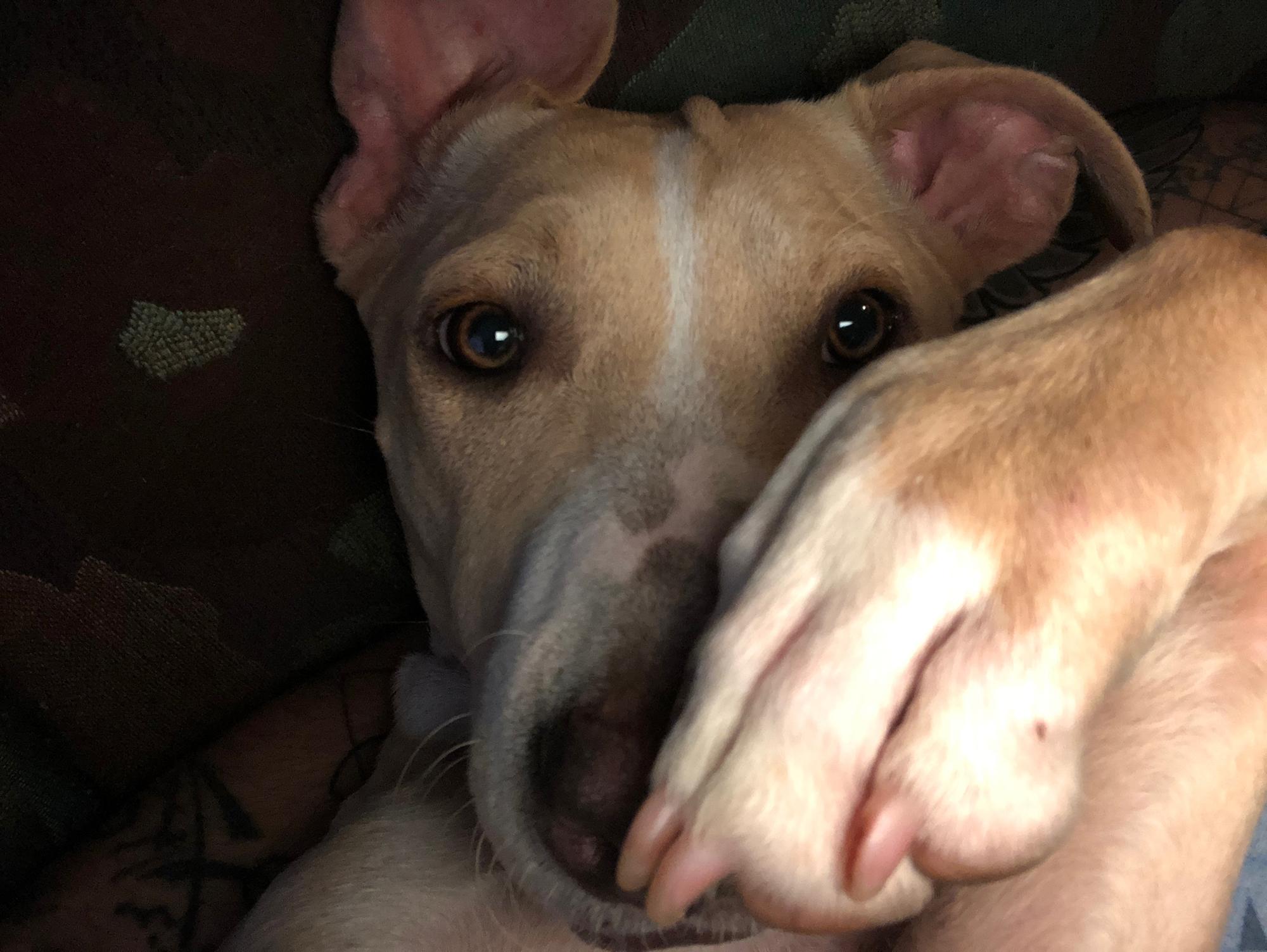 Ahsoka selfie