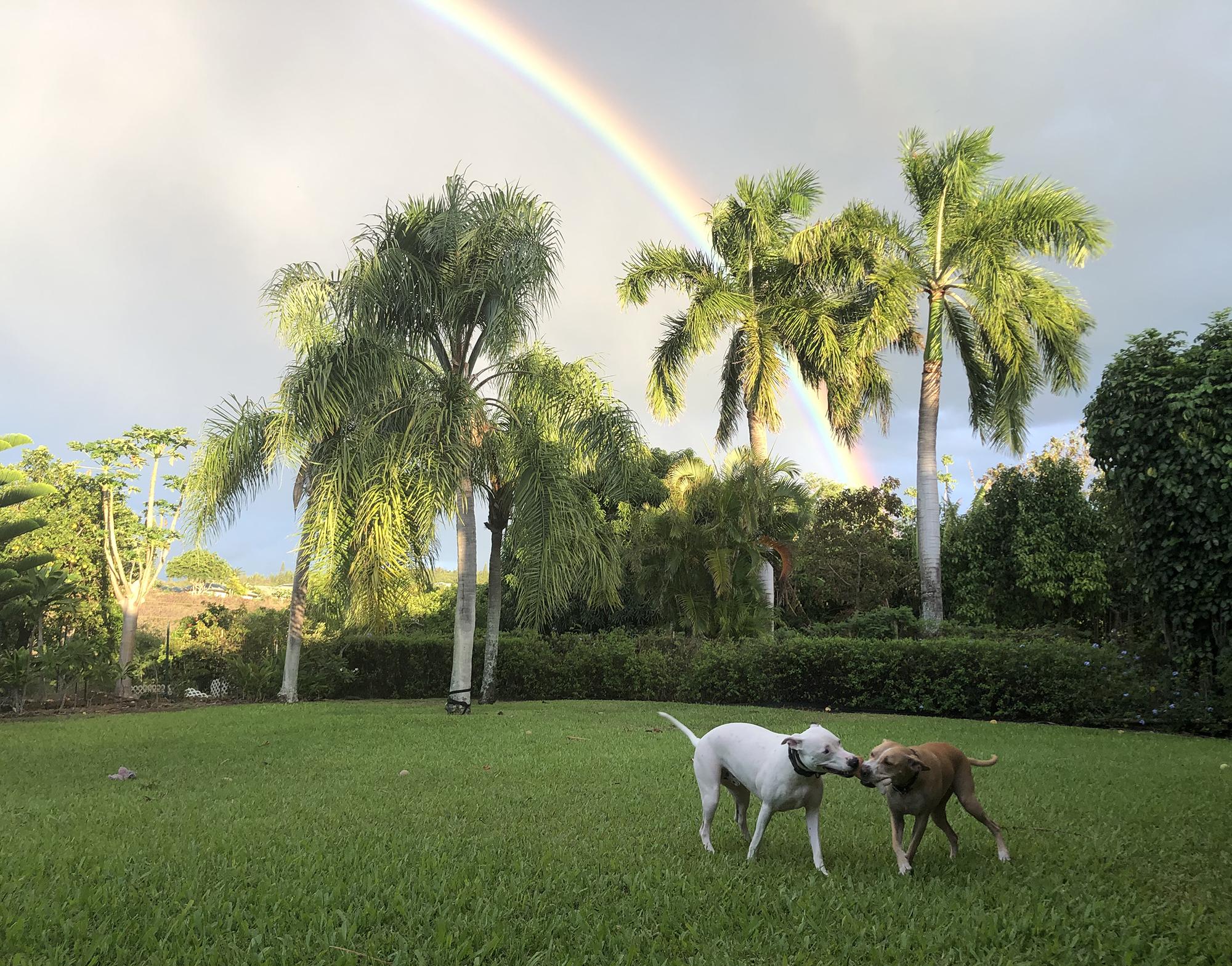 Rainbow Playdate