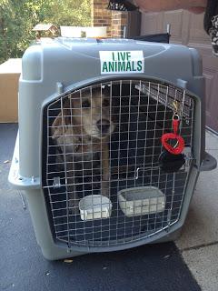Kennel Training