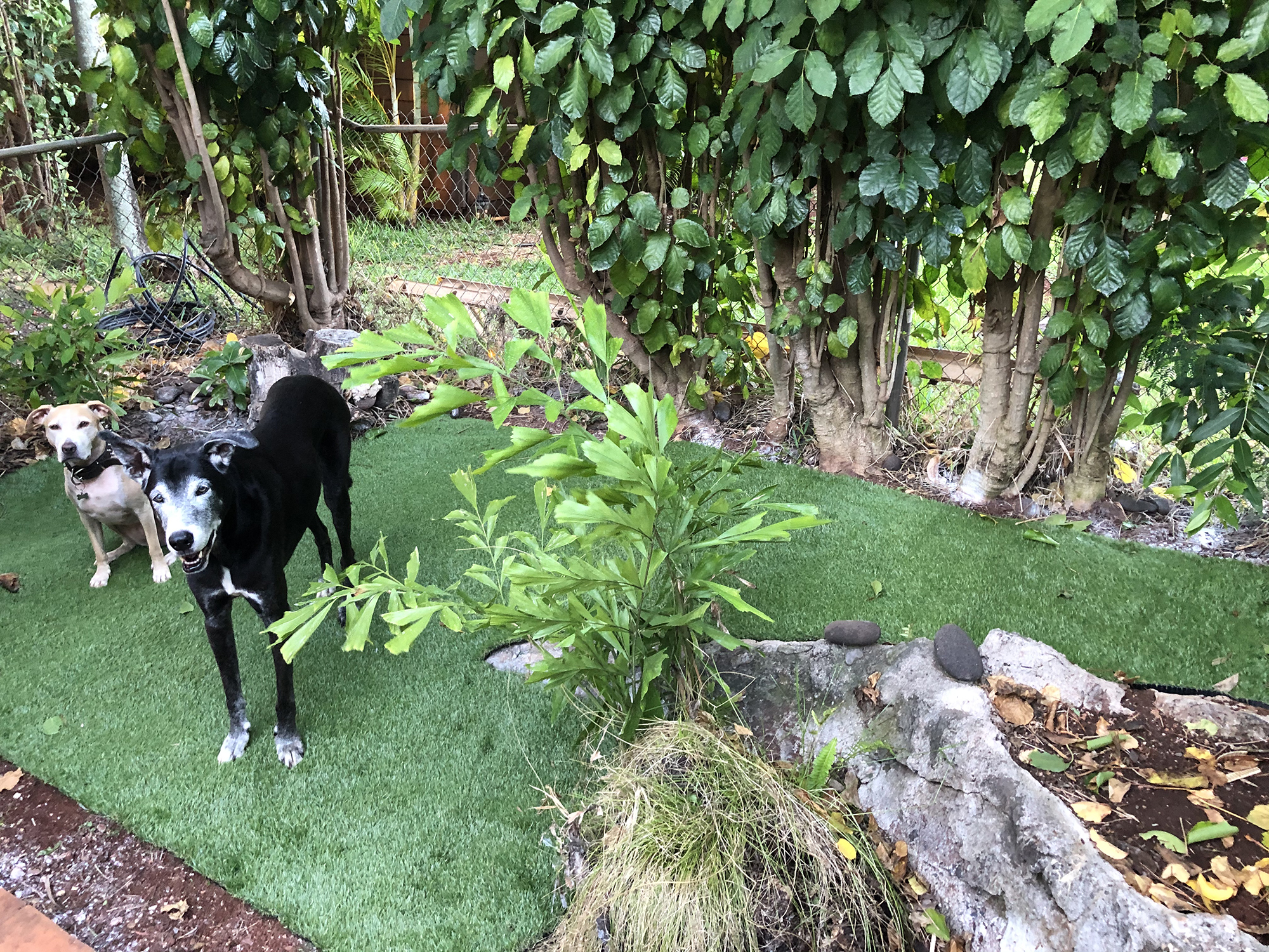 Designated Dog Potty Area