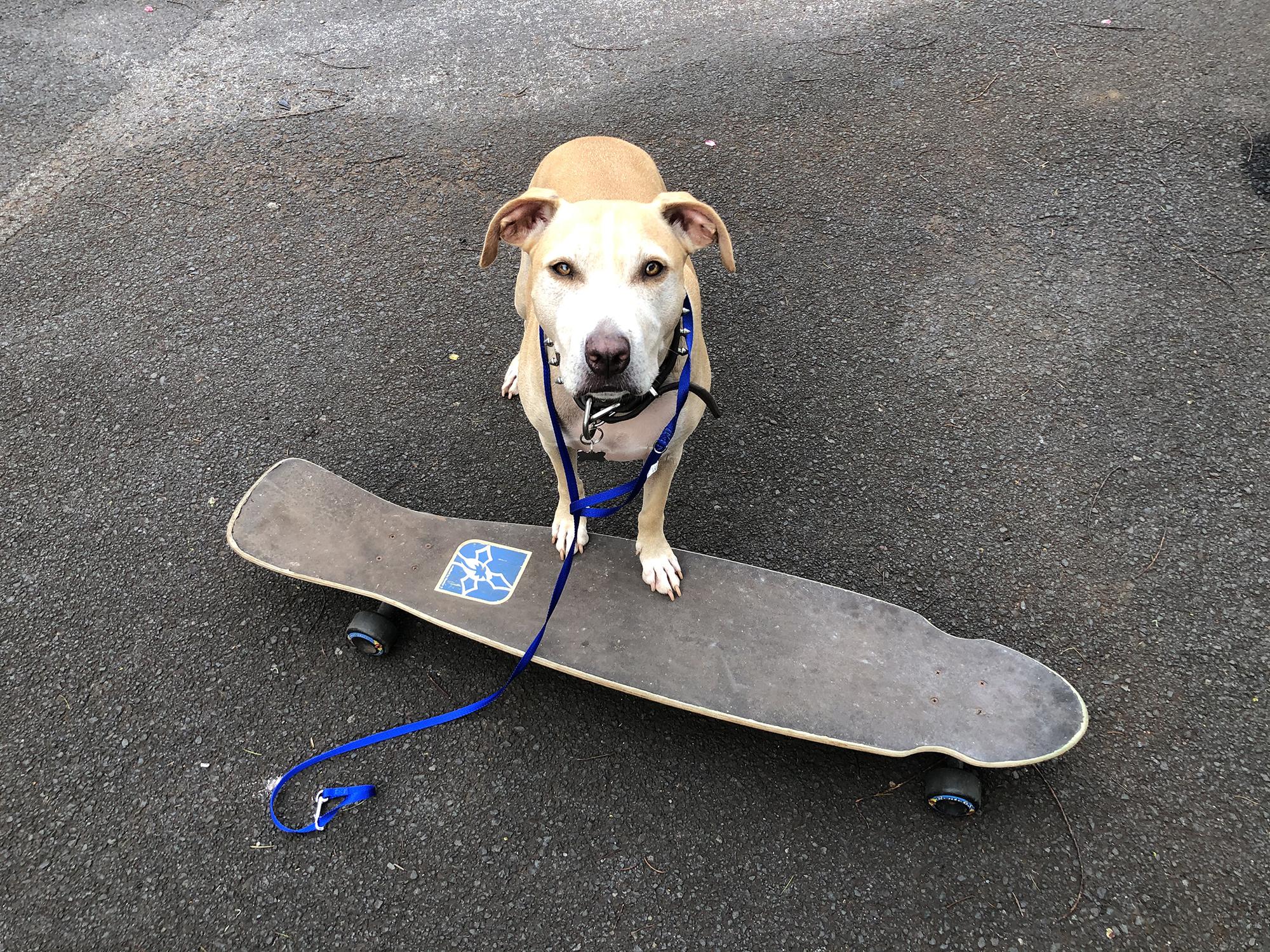Skateboard Dog:  Trick Training