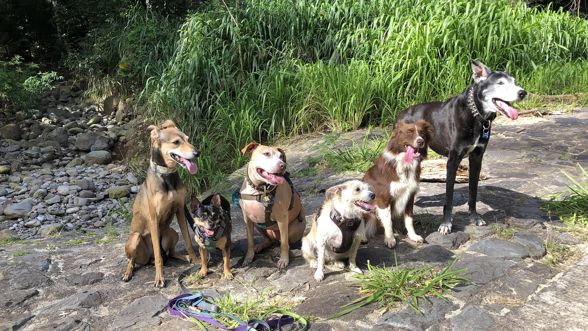 Summer Pawlooza May Hikes