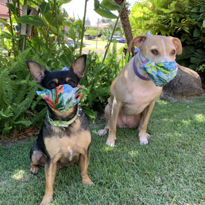 Mask dogs